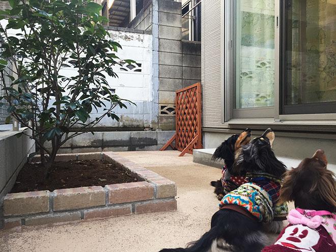 現在は3匹の愛犬と暮らす毎日。「引っ越し当初は少し寒そうにしていたのですが、今では元気に走り回っています」。