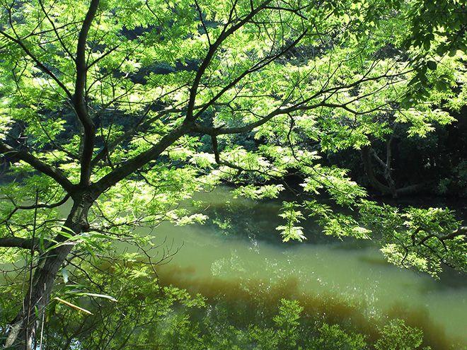 """歩いて5分ほどの近所には、""""谷戸""""と呼ばれるため池もある緑地が広がっており、「近所に四季を感じられるスポットがあるのは嬉しいですね。とても気持ちがいいです」とBさん。"""