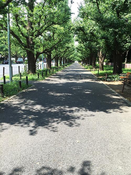 家の周りは緑が多く、お散歩すると気持ちが良いです。晴れたときにはちょっと遠くの公園までお散歩することもしばしば。