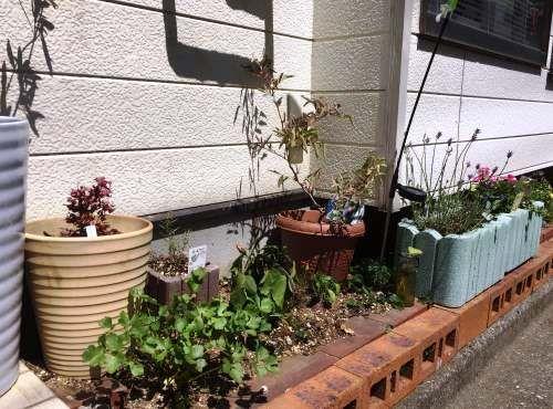 新居の周囲には花壇を作り、季節の花々やハーブなどを植えている。「日当たりがいいので良く育ちます」。