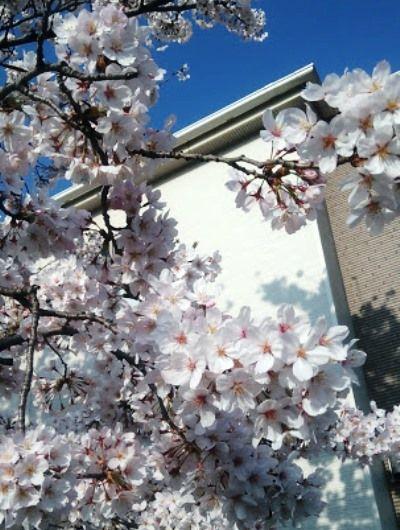 一番のお気に入りは、リビング東側の窓から見える眺望。「購入後に気づいたのですが、道路向かいの空き地に桜の木が植樹されていて、春はとてもきれいなんです。高い建物が建つ心配もないので圧迫感もなく、とても気持ちがいいですね」。