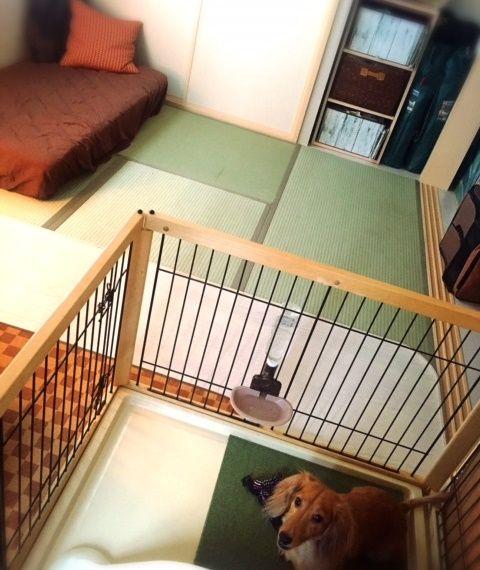 和室にはケージを置き、残りをフリースペースに。愛犬のため、24時間冷房をつけているそう。「夫が筋トレをしたり、私が習っている日本舞踊の自主練をするスペースにしたりと活用しています。和室の押し入れは収納力があるので、嵩張りがちな着物をしまうのに便利です」。