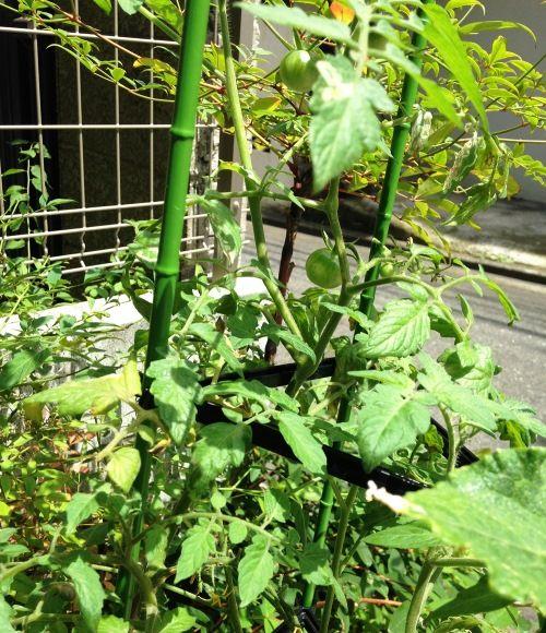 家庭菜園や庭づくりを楽しめることも、戸建て暮らしの醍醐味。「低樹木を植えたり、夏場はプチトマトやきゅうりなどを育てています」。
