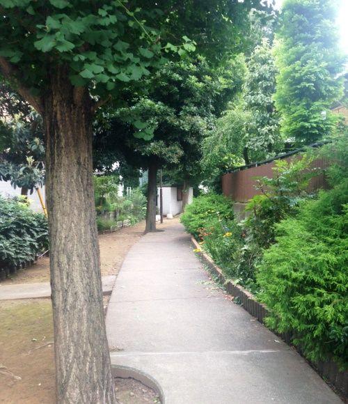 新居の近隣には多摩川緑道があり、よく訪れるという。「都内の緑道ほど整然とはしていないのですが(笑)、手を入れ過ぎていないところが気に入っています」。