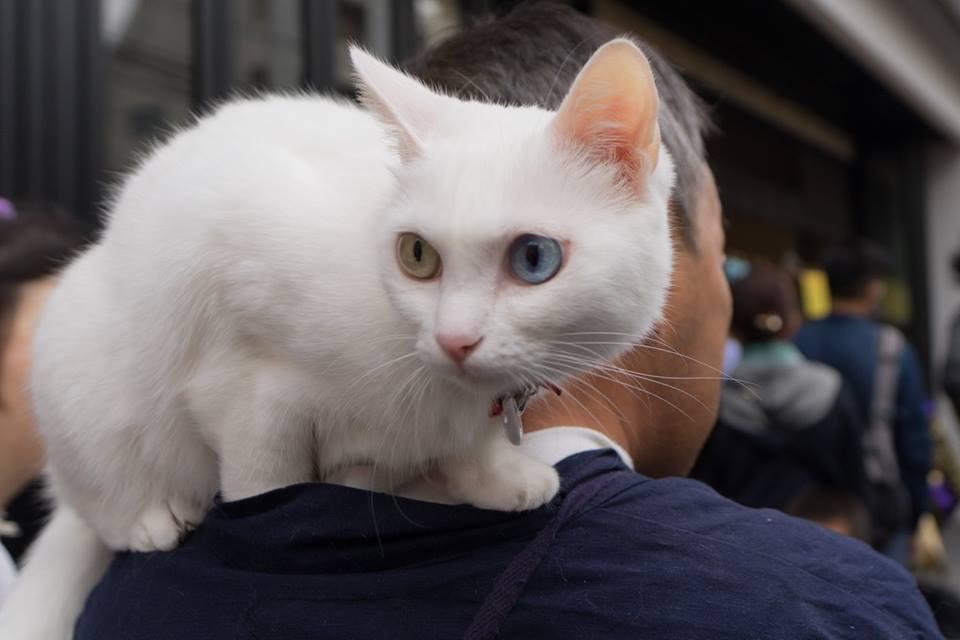 本物の猫とともに参加する方も。もちろん大人気で、スマートフォンを片手に撮影を試みる通行人が後を絶たなかった。