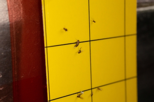 駆除 コバエ 【簡単コバエ対策】家庭でできる予防と駆除方法について|奈良県の賃貸なら【賃貸のマサキ】