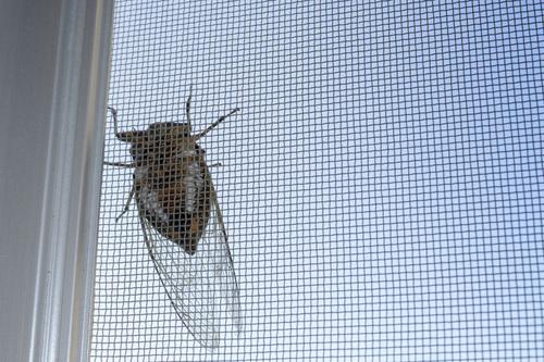 小さい ゴキブリ どこから